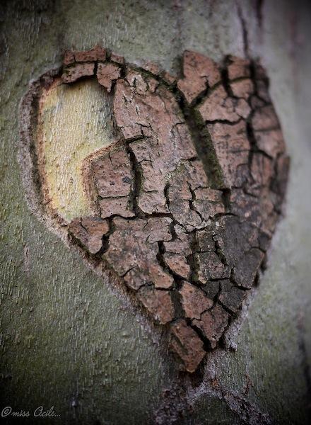 quand l'arbre a du coeur... P1040014