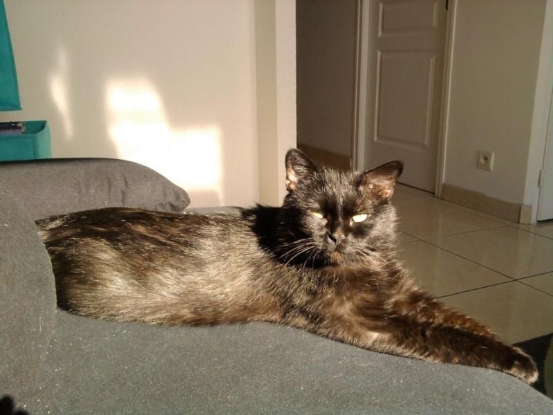 SOREN, 8 ans, câlinou FIV à adopter sans chat (27) - Page 2 Soren111