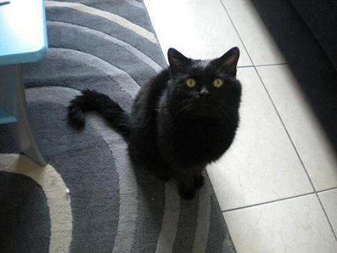 SOREN, 8 ans, câlinou FIV à adopter sans chat (27) - Page 2 Soren210