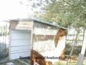 Construction d'une volière en image Dsc03418