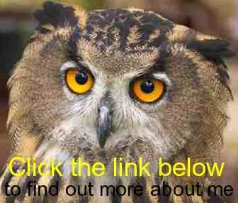 are Owls stupid as often claimed? Clink_10