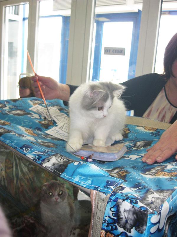 Международная выставка кошек 20-21 апреля в Минске. Фотоотчет Pictu100