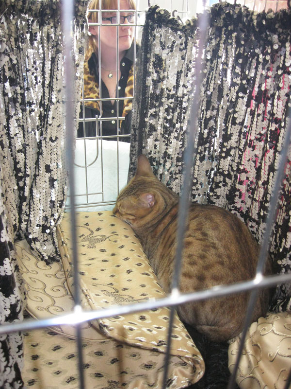 Международная выставка кошек 20-21 апреля в Минске. Фотоотчет Pictu102