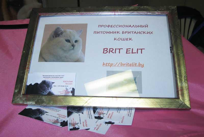 Международная выставка кошек 20-21 апреля в Минске. Фотоотчет Pictu121