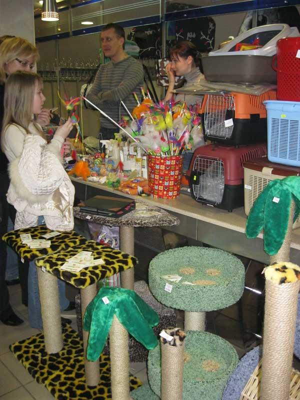 Международная выставка кошек 20-21 апреля в Минске. Фотоотчет Pictu125