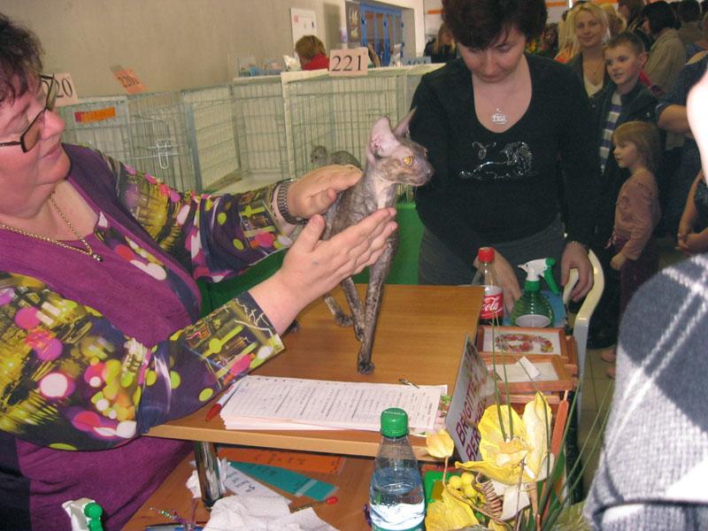 Международная выставка кошек 20-21 апреля в Минске. Фотоотчет Pictur84