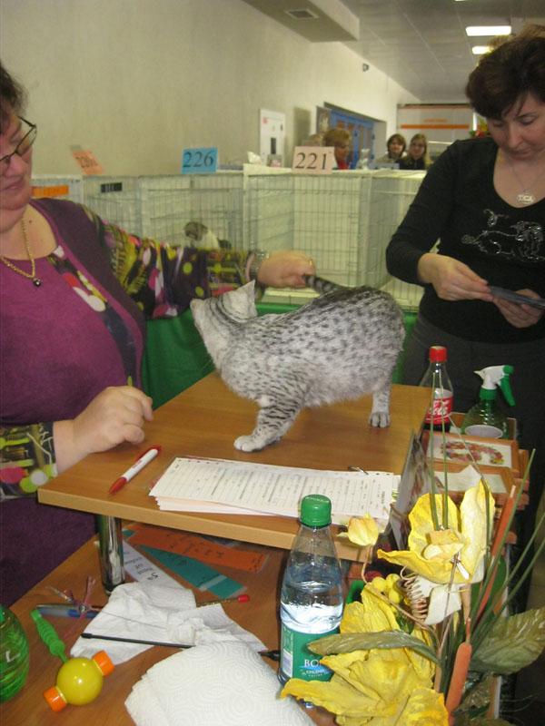 Международная выставка кошек 20-21 апреля в Минске. Фотоотчет Pictur87