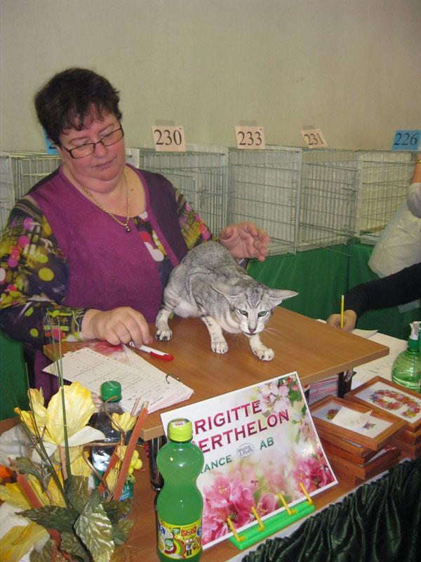 Международная выставка кошек 20-21 апреля в Минске. Фотоотчет Pictur90