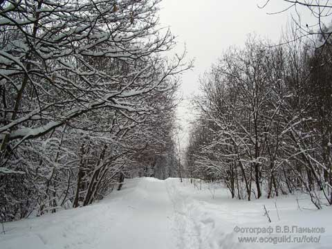 В лесу родилась ёлочка... Новогодняя сказка Dddddd11