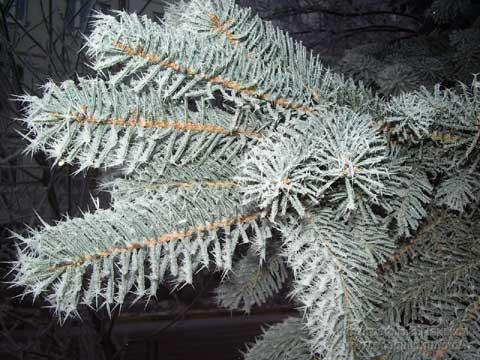 В лесу родилась ёлочка... Новогодняя сказка Ddddnn13