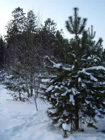 В лесу родилась ёлочка... Новогодняя сказка Ddndd-10