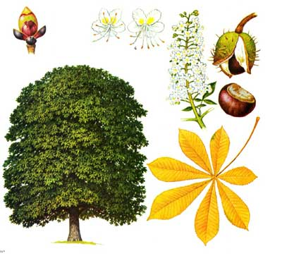 зодиак - Магические свойства деревьев. Магия деревьев. Деревья в магии. Ddnndd15