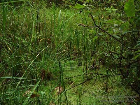 В лесу родилась ёлочка... Новогодняя сказка Dduddu10