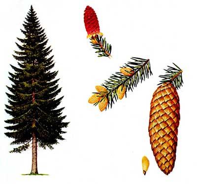 зодиак - Магические свойства деревьев. Магия деревьев. Деревья в магии. Dudno10