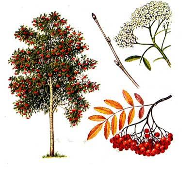 зодиак - Магические свойства деревьев. Магия деревьев. Деревья в магии. Nndddd10
