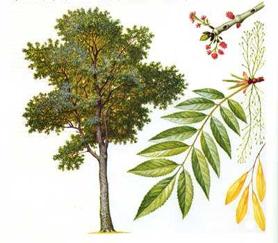 зодиак - Магические свойства деревьев. Магия деревьев. Деревья в магии. Nndudn10