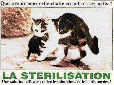 La stérilisation, un acte d'amour. 25085510