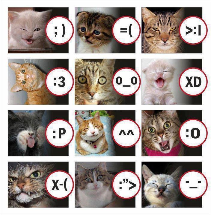 Chats smileys 37576610