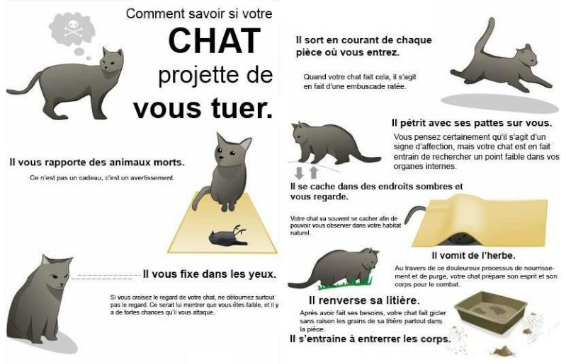Comment savoir si votre chat projette de vous tuer ??? 52595510