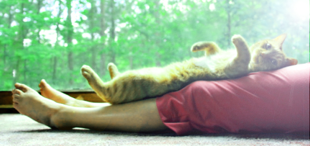 Pourquoi adopter un chat ??? Chat-r10