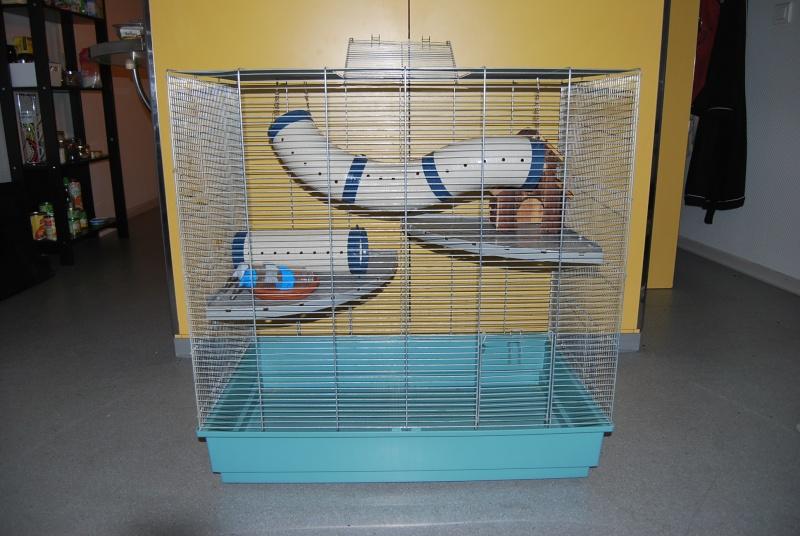 Vend cage jenny (33) Dsc_0011