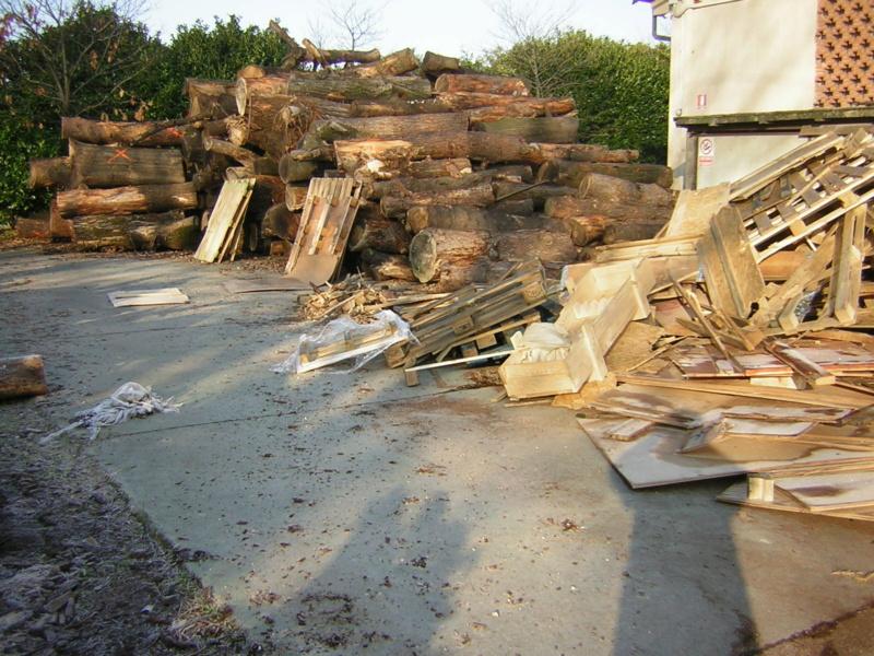 Taglio tronchi a terra di grosso diametro Dscn1499