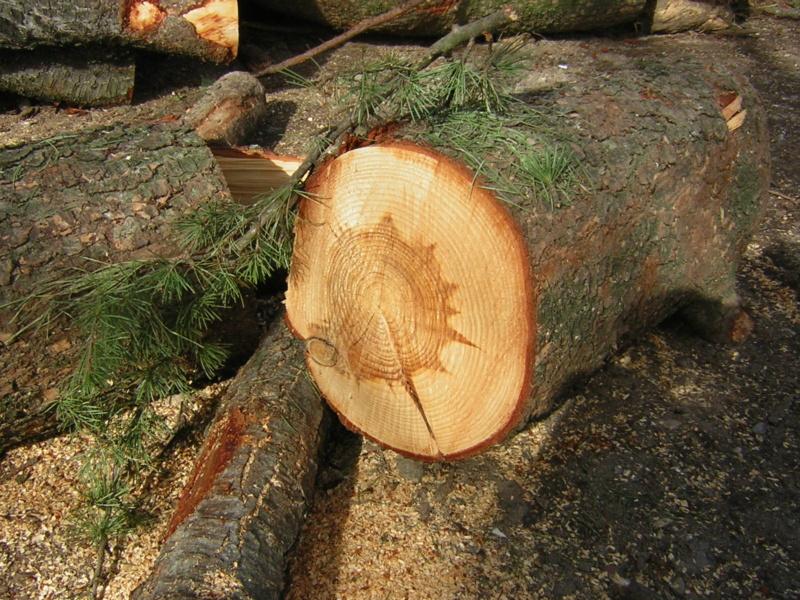 Aiuto riconoscimento legno - Pagina 2 Dscn1514