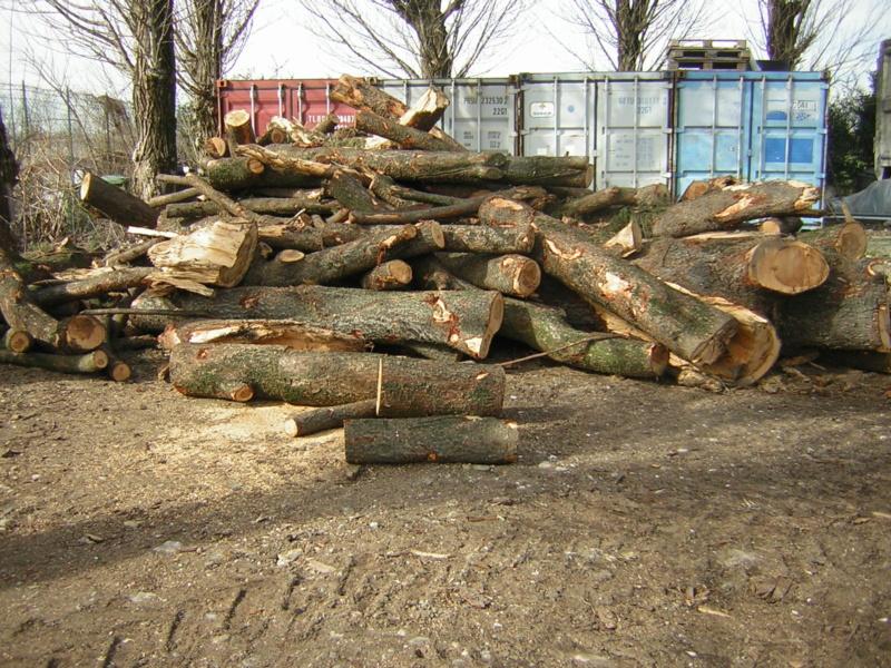 Aiuto riconoscimento legno - Pagina 2 Dscn1515