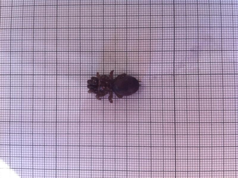 identification araignée impressionnante Img_0613