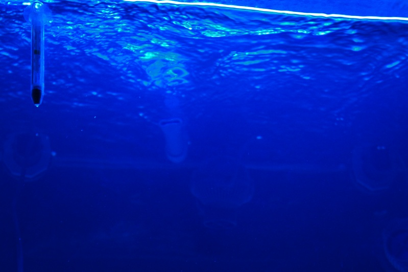 aquarium recifal - Page 3 Dsc00412