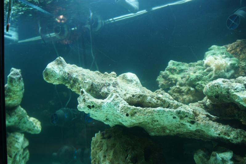 aquarium recifal - Page 3 Dsc00610