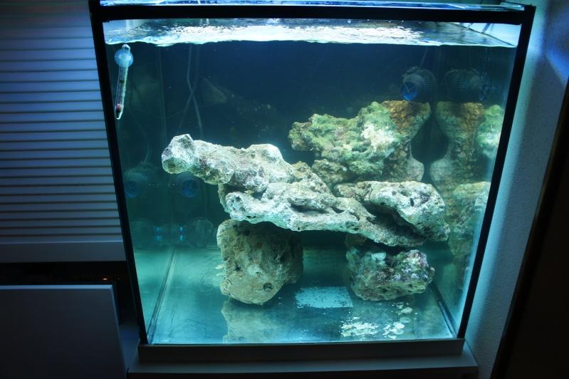 aquarium recifal - Page 3 Dsc00612