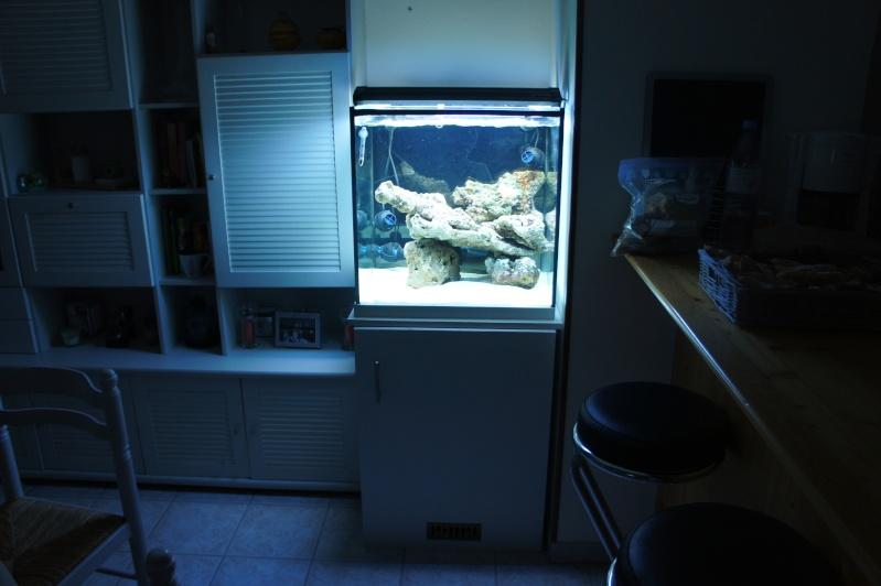 aquarium recifal - Page 4 Dsc00615