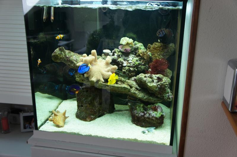 aquarium recifal - Page 4 Dsc00810