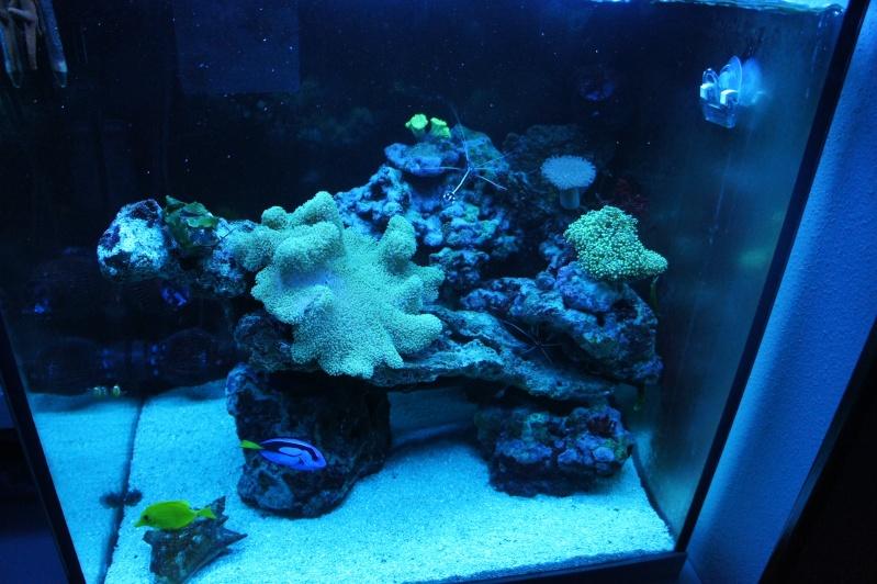 aquarium recifal - Page 5 Dsc01011