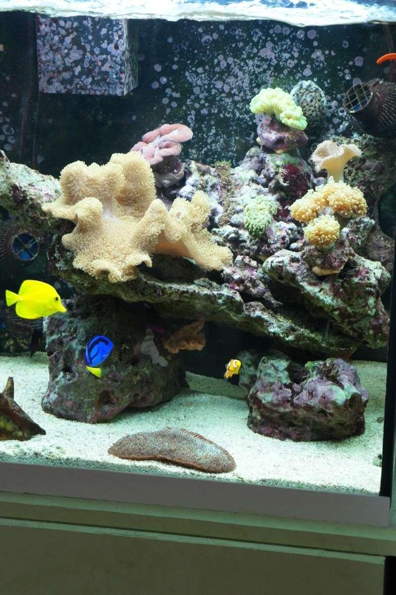 aquarium recifal - Page 5 Dsc01311