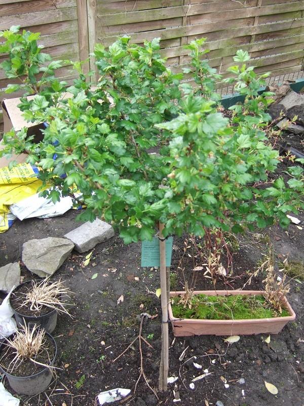 En avant pour l'aménagement de mon petit jardin !  Dscf0520