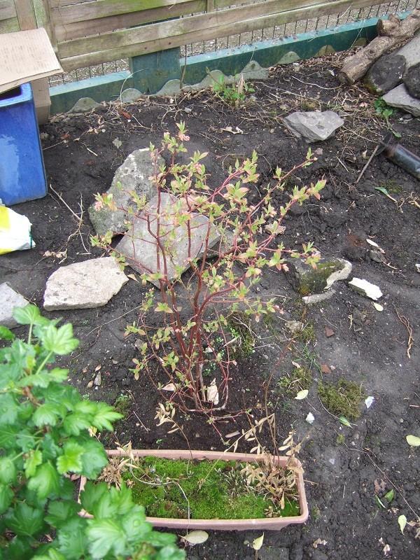 En avant pour l'aménagement de mon petit jardin !  Dscf0521