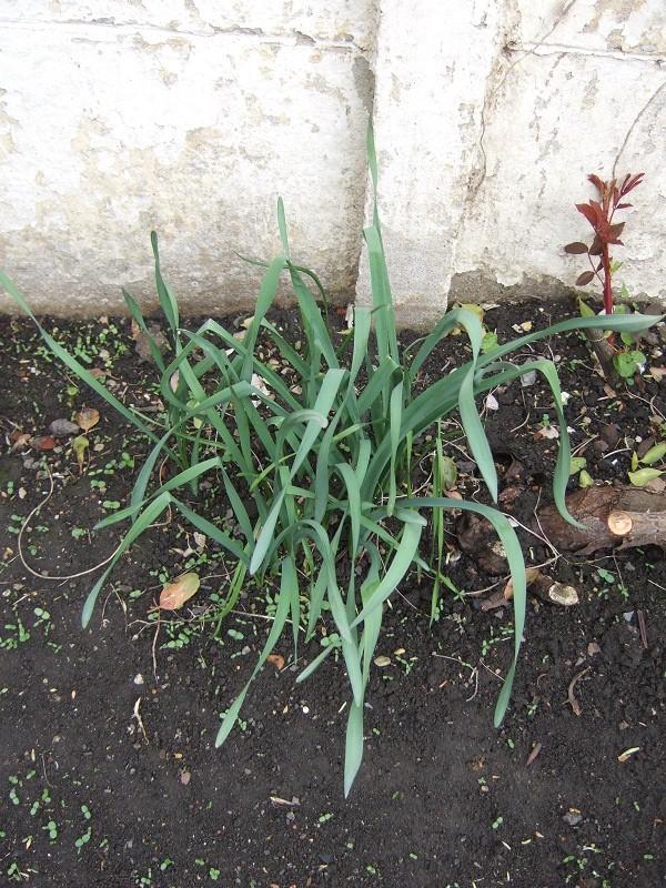 En avant pour l'aménagement de mon petit jardin !  Dscf0524