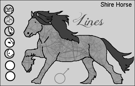 Dreamstreet & Lines Shirel11