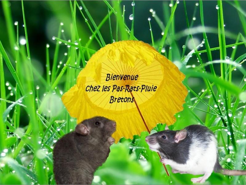 Les Pa-Rats-Pluie Bretons