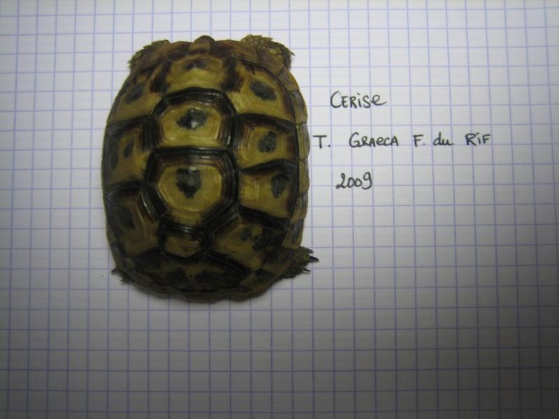 Naissance Graeca 2009 Img_0010
