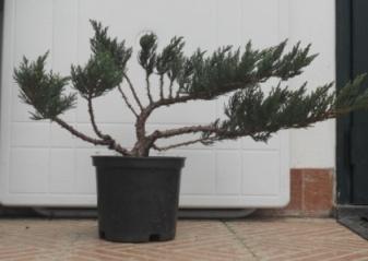 Come avete iniziato a fare bonsai? Dscn0511