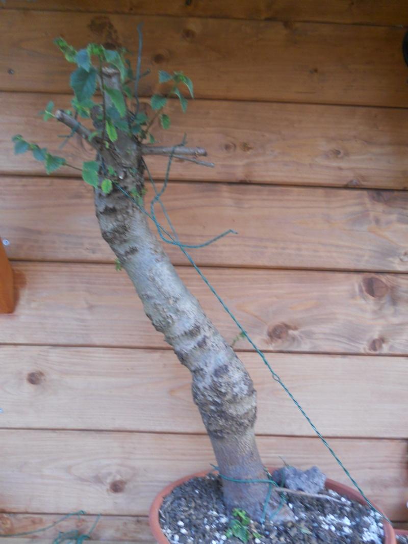 Come avete iniziato a fare bonsai? Dscn1016