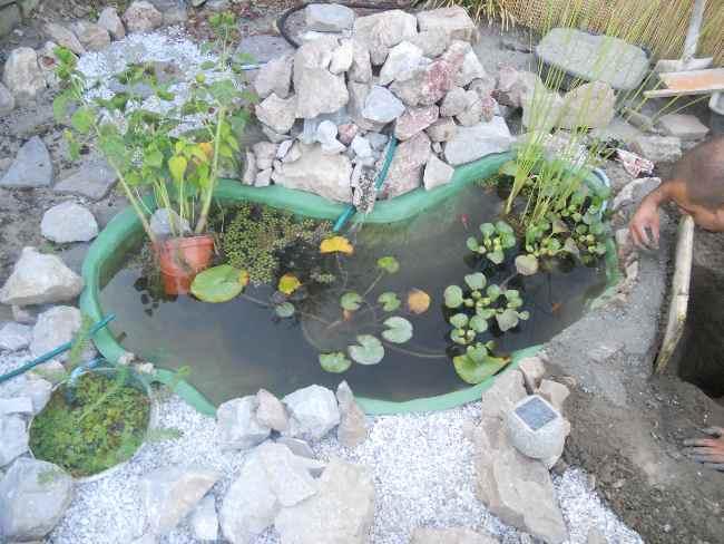 Costruzione del mio giardino.. Dscn1212