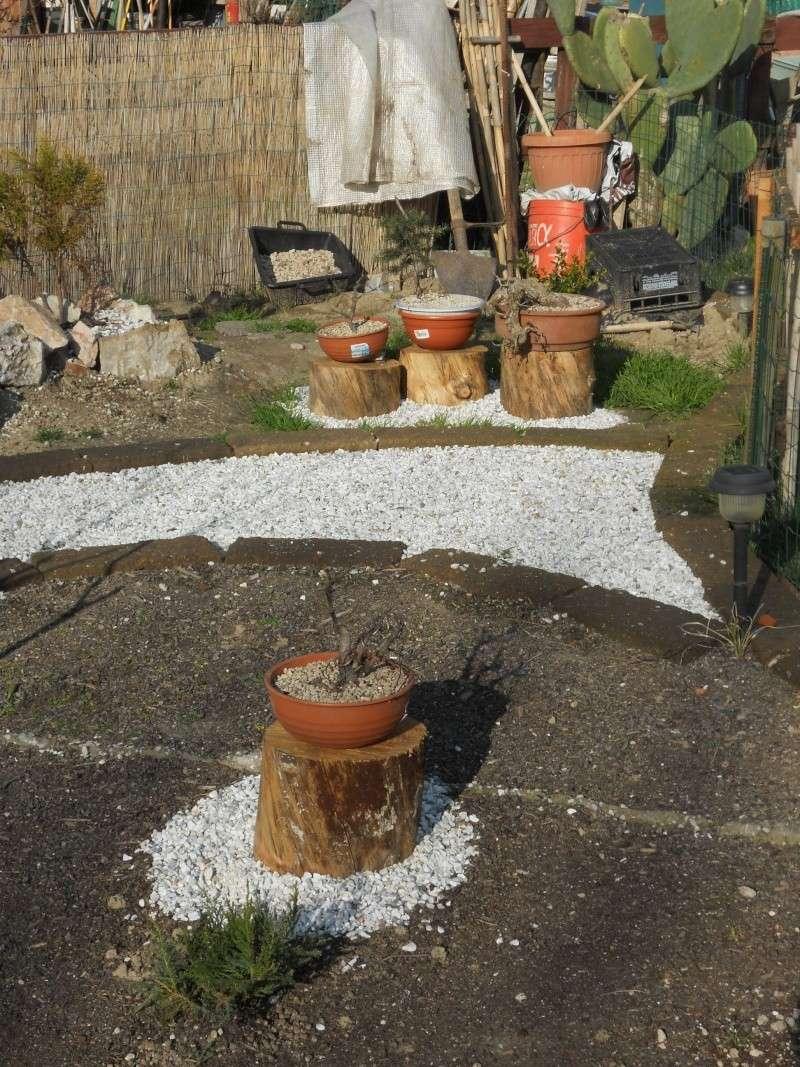 Costruzione del mio giardino.. Dscn2211