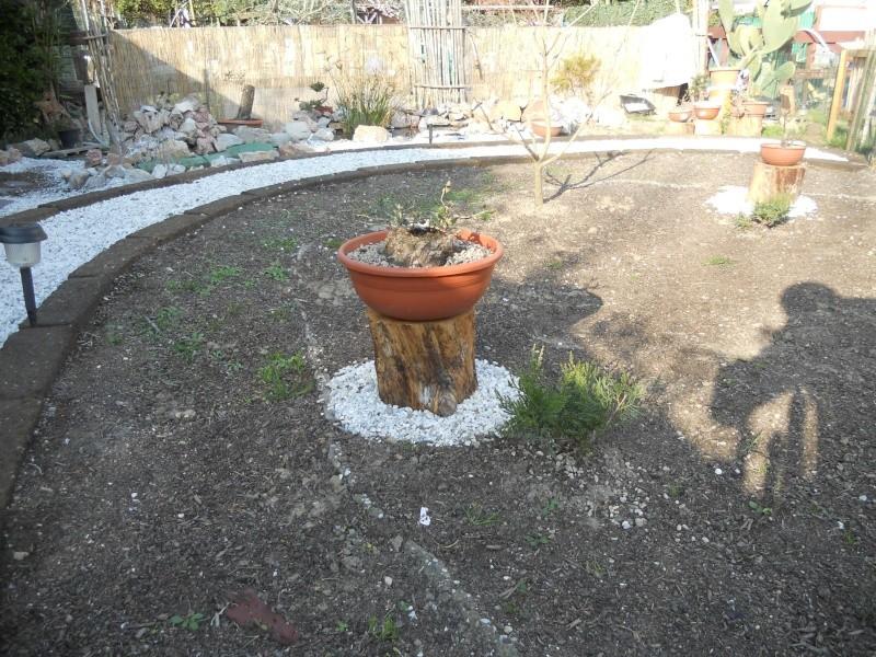 Costruzione del mio giardino.. Dscn2212