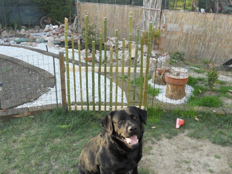 Costruzione del mio giardino.. Dscn2311