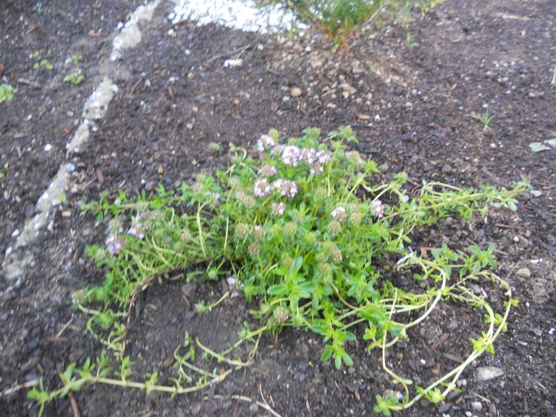 Costruzione del mio giardino.. Dscn2413