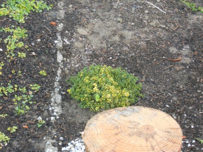 Costruzione del mio giardino.. Dscn2414